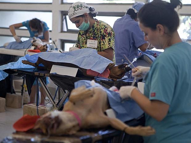 Cães esterilizados (Foto: Victor Ruiz Garcia/Reuters)