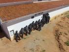 Vídeo mostra operação de revista e busca por túneis em Alcaçuz; veja