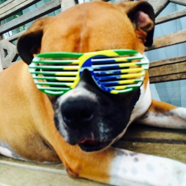 Um dos cães de Paola Oliveira preparado para o jogo Brasil X Croácia (Foto: Reprodução Instagram)