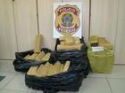 Polícia Federal prende quadrilha com 100 quilos de maconha em Natal