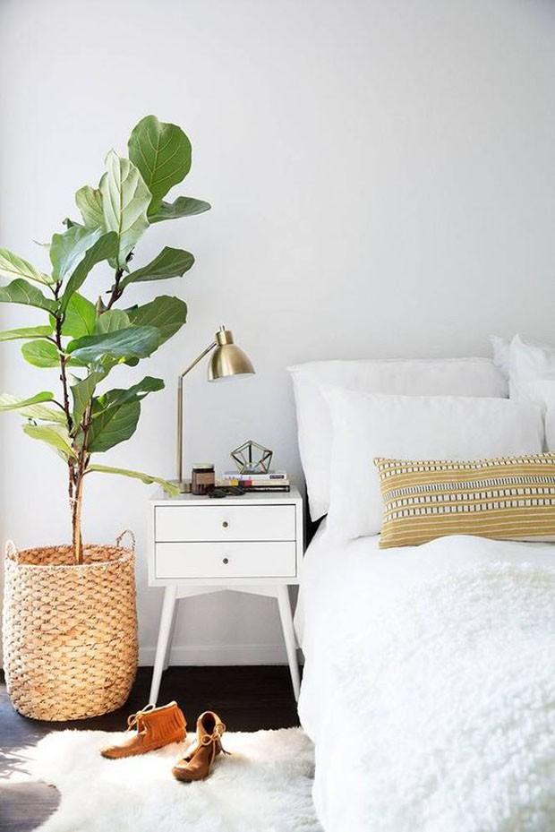 paisagismo-plantas-no-quarto (Foto: Divulgação)