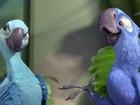 Conheça espécies reais que originaram personagens do filme 'Rio'