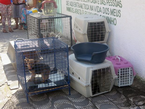 Cerca de 30 cães foram apreendidos por maus tratos e devem ser doados (Foto: Jéssica Bitencourt/G1)