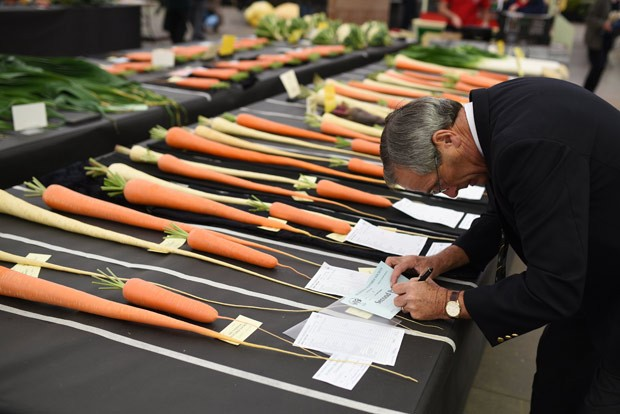 Juiz faz anotações durante campeonato de legumes gigantes (Foto: Oli Scarff/AFP)