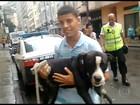 Cão roubado é encontrado no Rio com um foragido da justiça