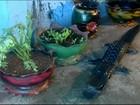 Borracheiro de Ibiá faz artesanato e móveis com pneus reciclados