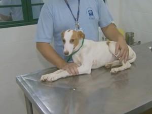 Castração de animais em Nova Odessa (Foto: Reprodução/EPTV)