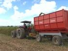 Produtores preparam a silagem para alimentar o gado em período de seca
