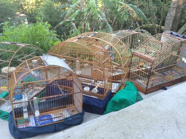 Aves eram mantidas em baixas condições de preservação (Foto: Divulgação: Polícia Federal)