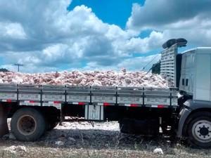 Queda de energia teria sido causa de morte de 11 mil frangos em São Gonçalo dos Campos, na Bahia (Foto: Arquivo pessoal)