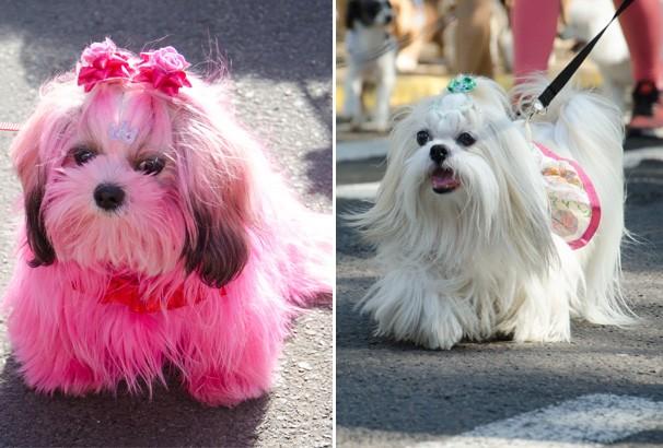 Cães de várias raças desfilaram charme e estilo (Foto: Rodrigo Oliveto)