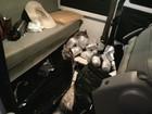 PRF encontra contrabando em fundo falso de caminhonete abandonada