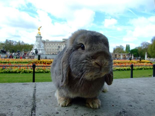 Jared em frente ao Palácio de Buckingham, em Londres (Foto: Korrasut Khopuangklang/Arquivo pessoal)