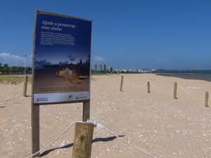 Um outro ninho foi cercado e está sendo monitorado  (Foto: Reprodução/TV Gazeta)