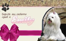 Deixe seu cachorro igual a Emily!