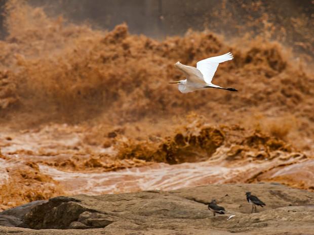 Garça voa em frente à barragem de Mascarenhas, enquanto ao fundo a lama de resíduos atinge o rio (Foto: Instituto Últimos Refúgios via BBC)