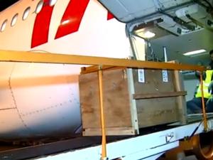 Compartimento de carga foi fechado para transportar o animal (Foto: Reprodução/TV TEM)