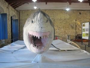 Tubarão foi capturado em 1992 (Foto: Anna Gabriela Ribeiro / G1)