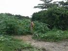 Combate a vetores tenta diminuir infestações em bairros de Cabo Frio