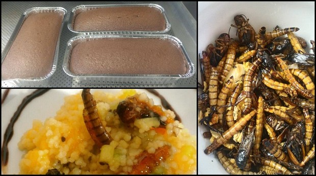 Inseto comida (Foto: Arquivo pessoal)