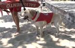 Conheça Ice, o cachorro salva-vidas