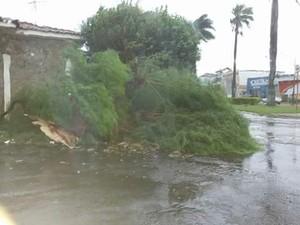 Quedas de árvores foram registradas em Jaú após forte chuva (Foto: Divulgação/Luizinho Andretto)