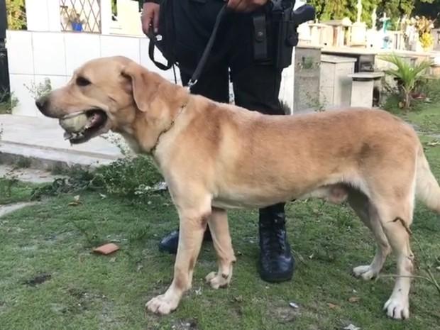 Cão farejador Messi da Polícia Militar da Paraíba, responsável por encontrar drogas e armas dentro de cemitério. (Foto: Walter Paparazzo/G1)
