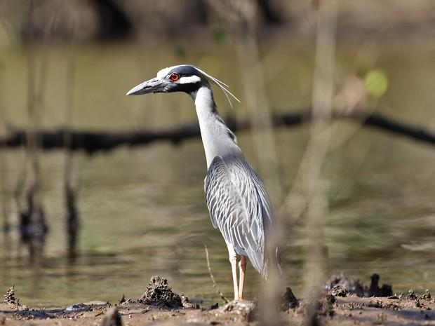 Das 87 espécies que vivem no local, pelo menos 14 estão ameaçadas de extinção. (Foto: Munir El Hage/PMSS)
