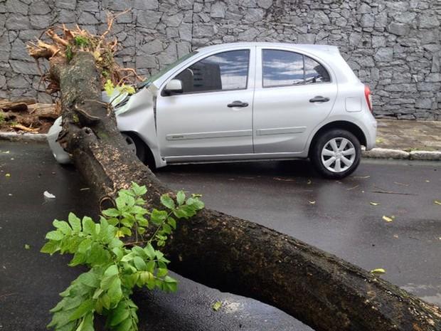 Árvore cai em cima de veículo em Setúbal (Foto: Kety Marinho/TV Globo)