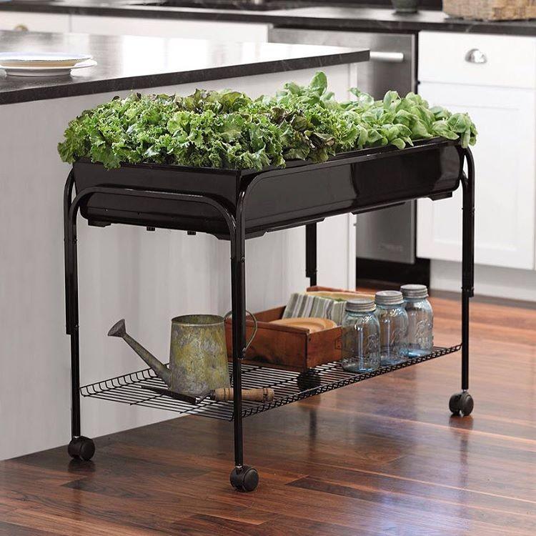 Pensando fora da caixa: já pensou em cobrir um carrinho de drinks com plantas em vez de bebida?!  (Foto: Divulgação)