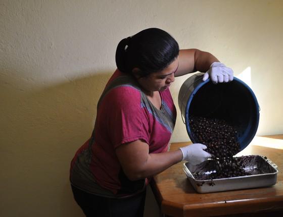 Sementes que sobram no processo de produção são destinadas a projeto de reflorestamento (Foto: Divulgação)