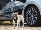 Montadoras 'lançam' carro invisível, hipster e placa de emoji no 1º de abril