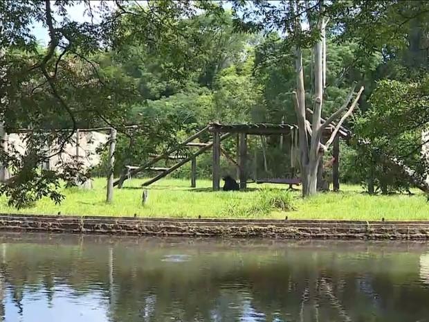 Zoológico de Sapucaia do Sul vai ser privatizado no Rio Grande do Sul (Foto: Reprodução/RBS TV)
