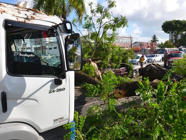 Uma árvore despencou e bloqueou parcialmente a Avenida Epitácio Pessoa, um dos principais corredores de João Pessoa, na manhã desta sexta-feira (28) após ser atingida por um caminhão. A árvore atingida ainda caiu em cima de outro carro, que seguia pela via no momento (Foto: Walter Paparazzo/G1)