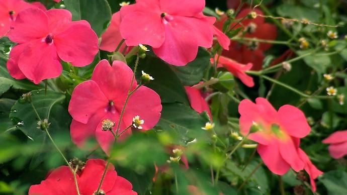 Cidade é a maior produtora de flores do estado (Foto: TV Bahia)