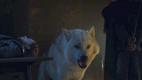O lobo de Jon Snow em cena de Game of Thrones (Foto: Reprodução)