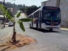 Morador faz protesto inusitado e planta bananeira em buraco de asfalto