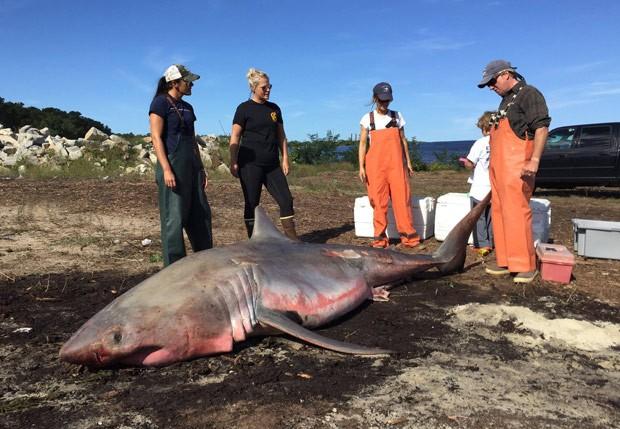 Carcaça estava e praia perto de onde foi filmado o clássico 'O Tubarão'. (Foto: Reprodução/Facebook/Atlantic White Shark Conservancy)