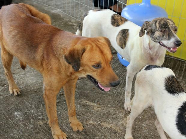 Cães aguardam para serem adotados em feira (Foto: Ivanete Damasceno/G1)