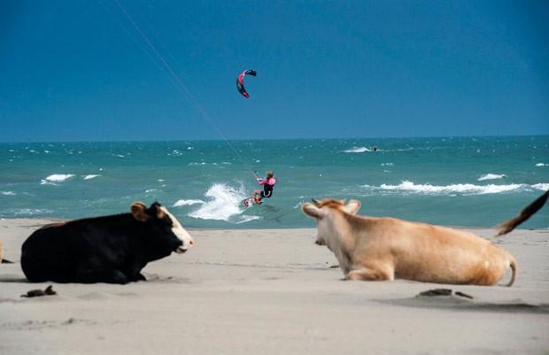 Vacas foram flagradas 'curtindo' praia em Montenegro (Foto: Armend Nimani/AFP)