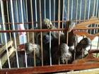 Filhote de preguiça é encontrado em via pública no Amapá, diz PM