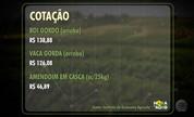 Arroba do boi gordo se mantém em pouco mais de R$ 138