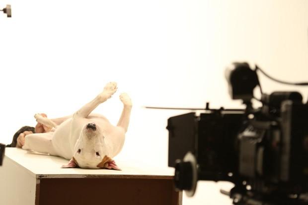 Jimmy Choo, o Bull Terrier de 600 mil seguidores  (Foto: Rafael Mantesso e Divulgação)