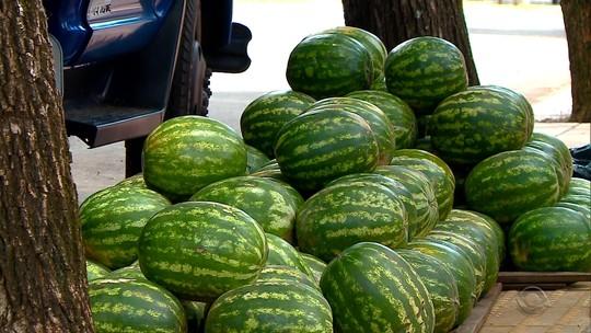 Otimismo marca colheita de melão e melancia no Noroeste do RS