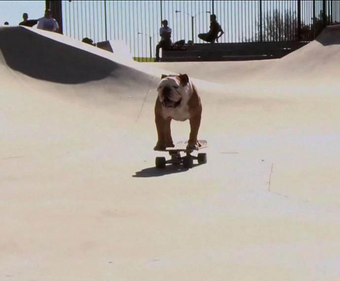 Cachorro mostra toda sua habilidade no skate (Foto: TV Globo)