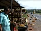 Comerciantes devem deixar margens da BR-060 em dois meses, em Goiás