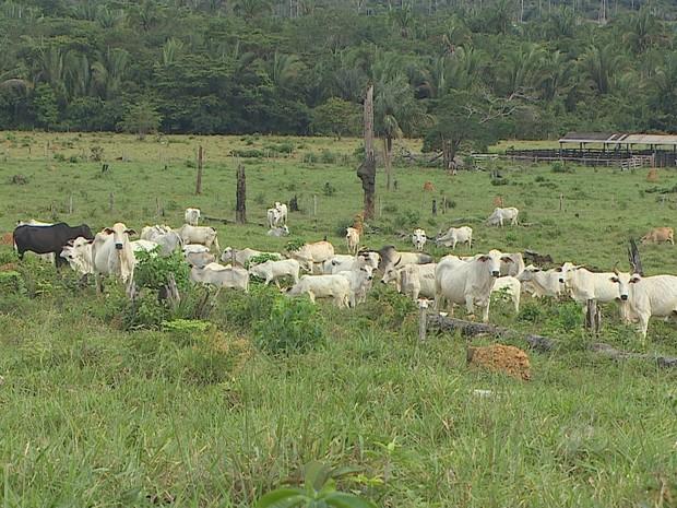 Acordo pretende evitar a compra de carne bovina de procedência irregular  (Foto: Reprodução/TV Rondônia)