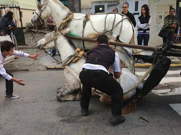 registro do cavalo caído no Centro Histórico da cidade nesta terça-feira (16) (Foto: Divulgação)