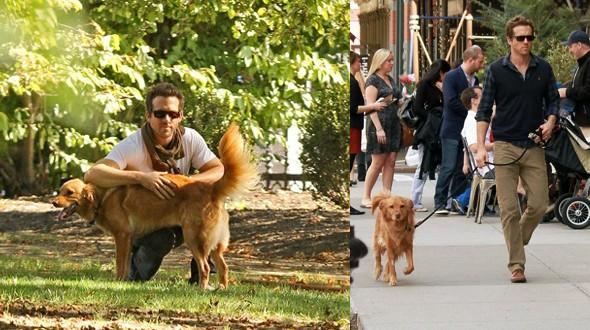 Ryan Reynolds e seu grande amigo Baxter (Foto: .)
