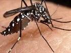 Mais duas cidades  do Paraná estão com epidemia de dengue, diz boletim